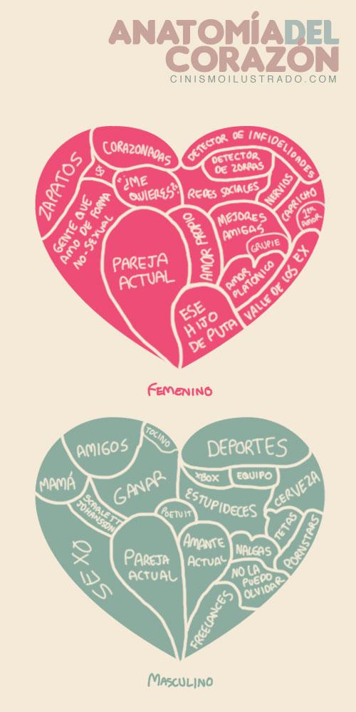Anatomía del corazón masculino y femenino #infografia #infographic ...