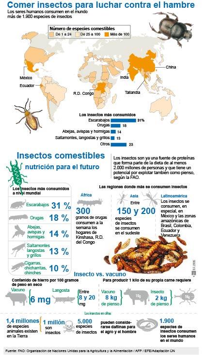 Comer insectos para luchar contra el hambre