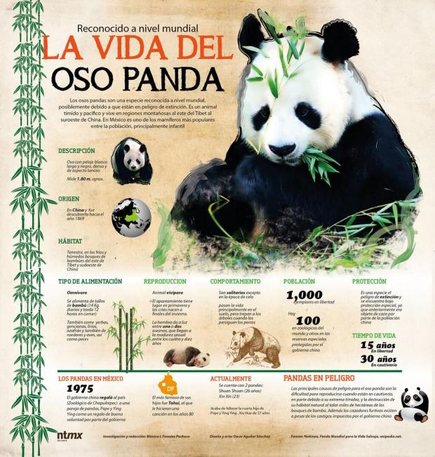 La vida del Oso Panda