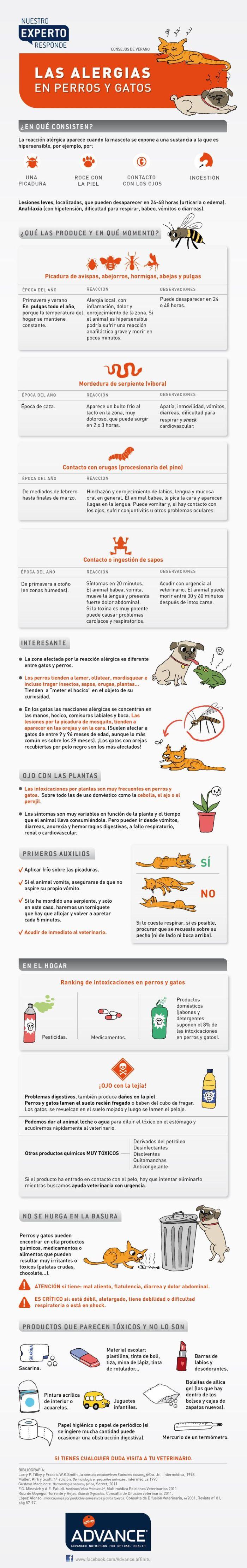 Las alergias en perros y gatos