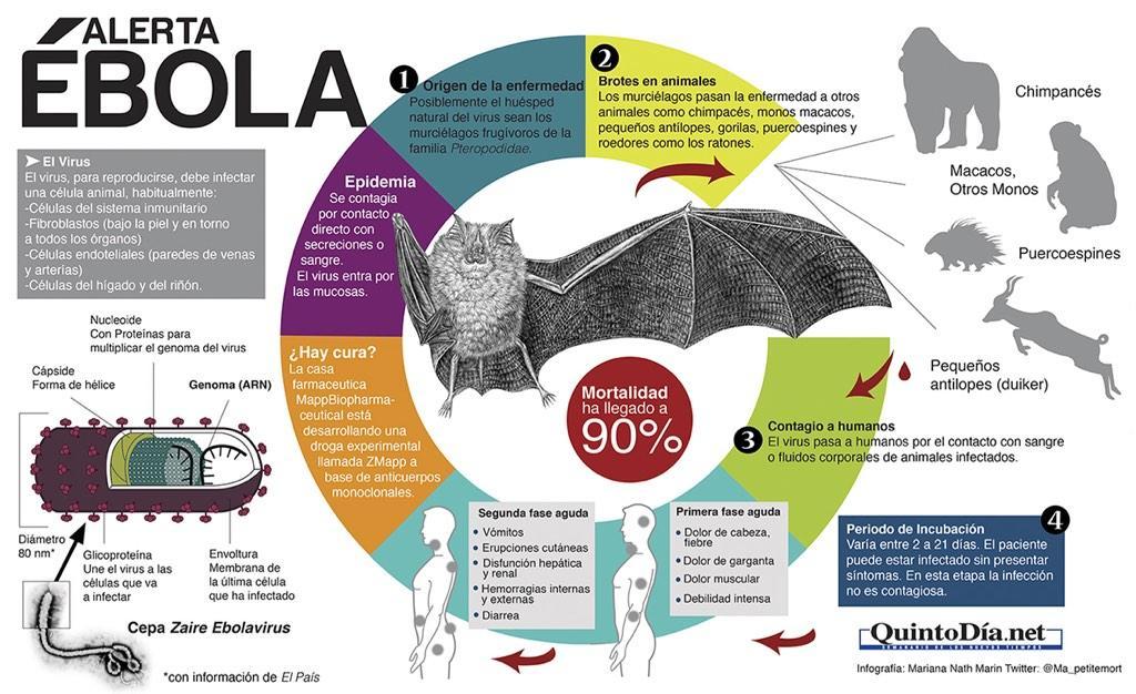 Lo que debes conocer sobre el ébola